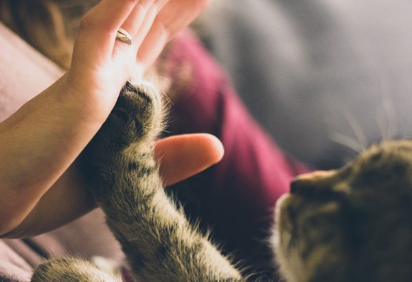 Different Handshakes: How to Shake Hands in Sales